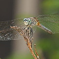 Dragonfly by Megan Cohen