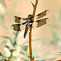 Dragonfly by Michael R Erwine