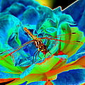 Dragonfly On A Cosmic Rose by Ben Upham III