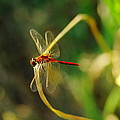 Dragonfly On A Summer Day by Jeff Swan