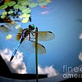 Dragonfly Reflecting On A Beautiful Day by Renee Trenholm