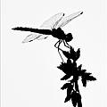 Dragonfly Silhouette by Christina Ochsner