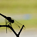 Dragonfly Silhouette by Julie Wynn