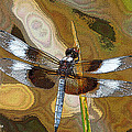 Dragonfly Waiting For A Fly by Tom Janca