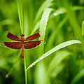 Dragonfly Waits by Jim O'Neill