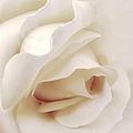 Dramatic Ivory Rose Flower