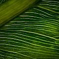 Dramatic Leaf Abstract by Debbie Orlando