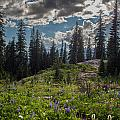 Dramatic Rainier Flower Meadows by Mike Reid