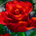 Dramatic Red Rose by Suzanne Cerny