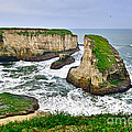 Dramatic View Of Shark Fin Cove In Santa Cruz California. by Jamie Pham