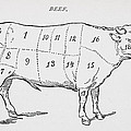 Drawing Of A Bullock Marked To Show Eighteen Different Cuts Of Meat by English School