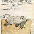 Drawing Of A Seal by British Library