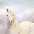 Dream Horse by Karen Slagle