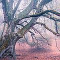 Dream Oak II Color 2 by Alexander Kunz