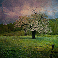 Dream Of Spring by Jeff Folger