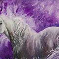 Dream Stallion by Sherry Shipley