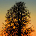 Dream Tree At Sunset by Nancy Myer