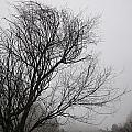 Dreamer Tree by Guido Montanes Castillo
