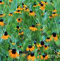 Dreaming In Orange by Judi Bagwell