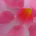 Dreaming In Pink by Ira Shander
