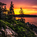 Dreaming Of Acadia by Robert Clifford