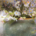 Dreaming Of Forget-me-nots by Peggy Collins