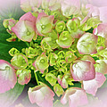 Dreaming Of Pink Hydrangeas by Mother Nature