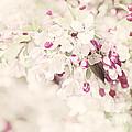 Dreaming Of Spingtime Blossom by Natalie Kinnear