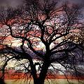 Dreaming Tree by Leah VanHoose