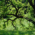 Dreaming Under The Old Oak by Donna Blackhall