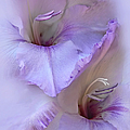 Dreams Of Purple Gladiola Flowers by Jennie Marie Schell