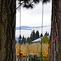 Dreams Of The Swing by Image Takers Photography LLC - Carol Haddon