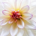 Dreamy Dahlia by Mary Jo Allen