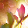 Dreamy Ethereal Pink Tulip Bokeh Circles by Kathy Fornal