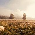 Dreamy Fields. The Trossachs. Scotland by Jenny Rainbow