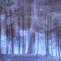 Dreamy Forest by Scott Hervieux