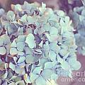 Dreamy Image Of Hydrangea Flower by Aleksandar Mijatovic