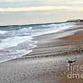 Dreamy Ocean Beach North Carolina Coastal Beach  by Kathy Fornal