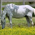 Dreamy Pony by Mary Almond