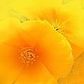 Dreamy Poppies by Kume Bryant