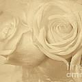 Dreamy Roses by Jayne Carney