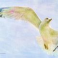 Dreamy Soft Seagull by Deborah Benoit