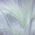 Dreamy Softness. Pastel Grasses by Jenny Rainbow