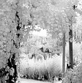 Dreamy Surreal Black White Infrared Arbor by Kathy Fornal