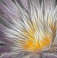 Dreamy Waterlily by Susan Candelario