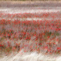 Dreamy Wildflowers by Carolyn Fletcher