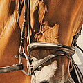 Dressage And Details by Joni Beinborn