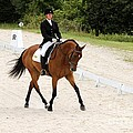Dressage Test by Janice Byer