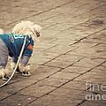 Dressed Up Dog by Juli Scalzi