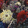 Dried Delight 6 by Tim Allen